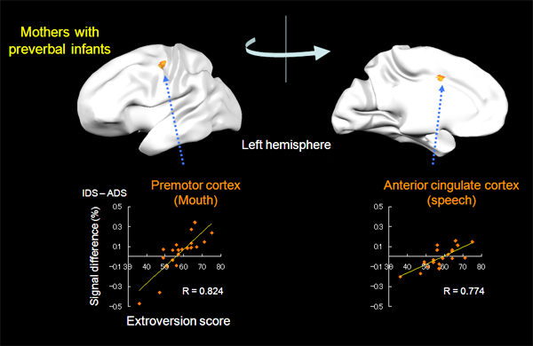 correlation of brain activity and level of extroversion