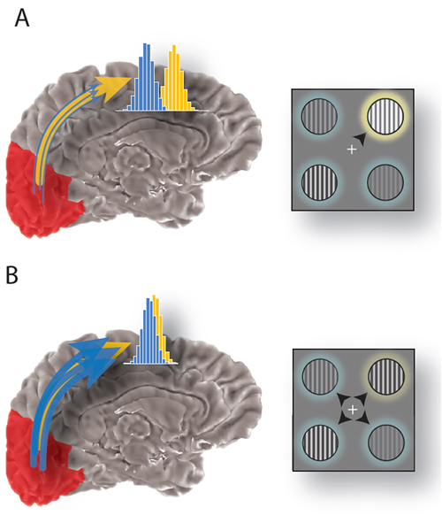 Figure showing how selection of sensory signals can account for improved behavioral performance