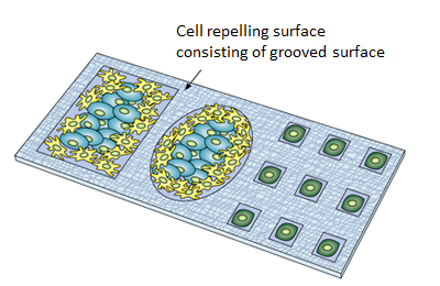 Figure showing the cell culture and sorting on the biomaterial