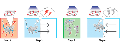 cartoon showing reactivated experiences via optogenetics