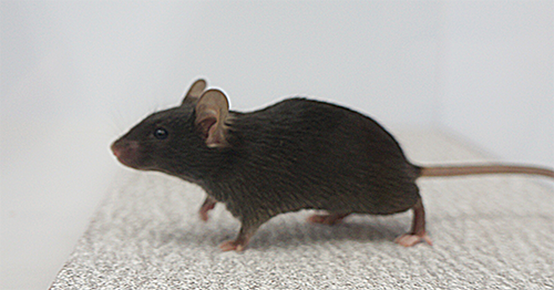 Photo showing mouse on textured floor