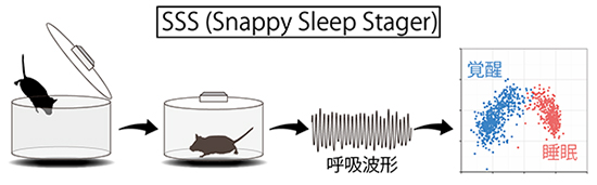 SSS(Snappy Sleep Stager)によるマウスの睡眠解析の図