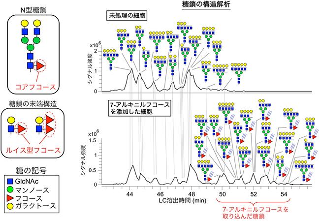 糖鎖の高感度検出に成功 | 理化学研究所