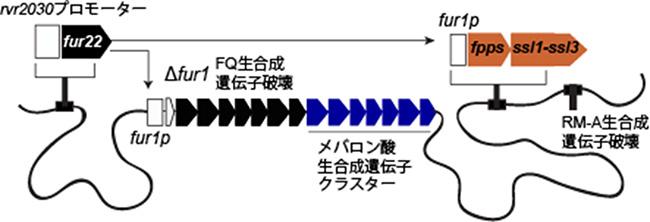 ボツリオコッセン生産プラットフォームの図