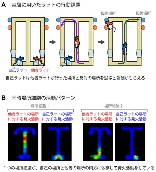 他者認識課題と同時場所細胞の図