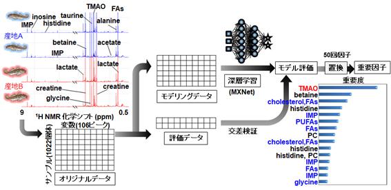 本研究で開発した深層学習(DL)アルゴリズムの概要の図