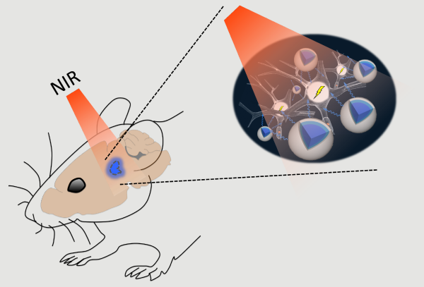 schematic of NIR stimulation combined with optogenetics