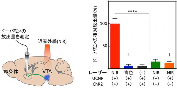 青色放出UCNPを用いた光遺伝学によるドーパミン神経細胞の活性化の図