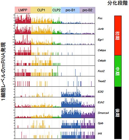 マウス骨髄の前駆細胞における1細胞レベルの遺伝子発現の図