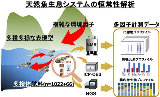 本研究で実施した天然魚生育システムの恒常性解析の図