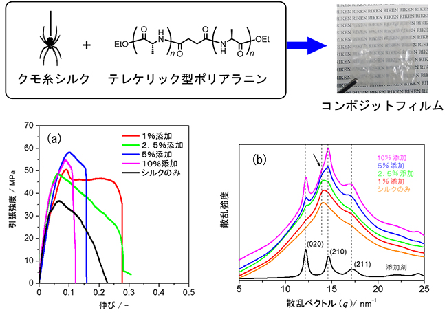 シルクコンポジットフィルムの結晶構造および機械的強度の図