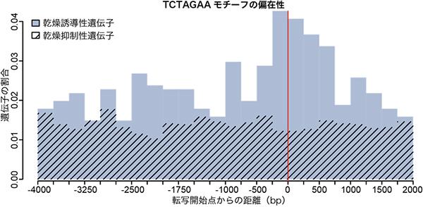 ネムリユスリカの乾燥誘導性遺伝子の転写開始点近傍の特異的なDNAモチーフの図
