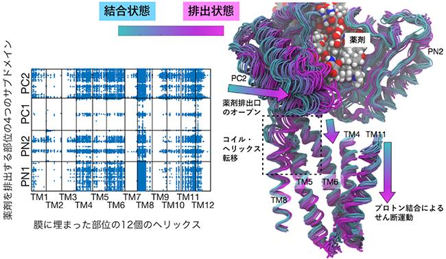 膜に埋まった部位と薬剤排出部位の動きの網羅的な相関解析の結果の図