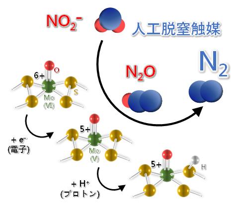 人工脱窒触媒を用いた亜硝酸の無害化反応のメカニズムの図