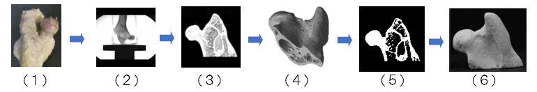 生体形状の3D造形(BJ方式)による作製例の図