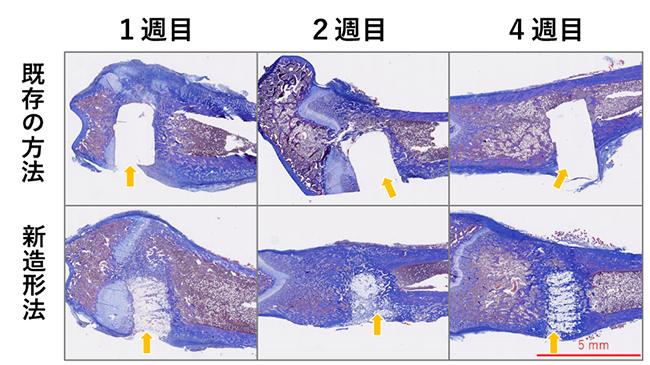 ラット大腿骨における既存方法と新造形法材料の比較の写真