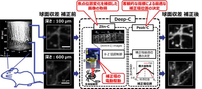 自動球面収差補正システム(Deep-C)の概要の図
