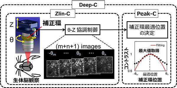 Deep-C概略図