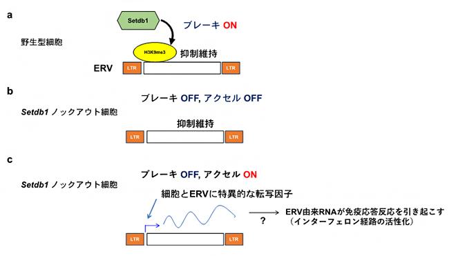 本研究で提唱したモデルの図