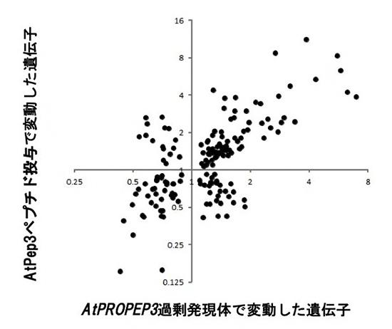 ペプチド投与あるいは過剰発現体で変動する遺伝子の比較の図