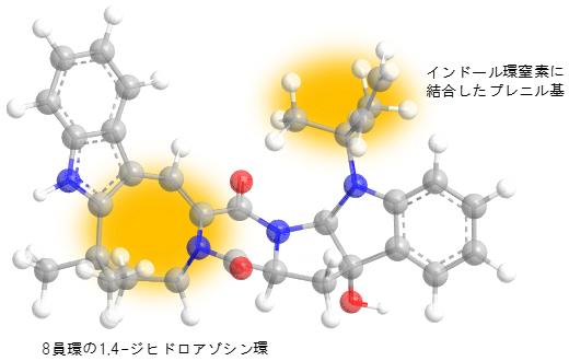 オカラミンAの殺虫活性に必須な部分(黄色)の図