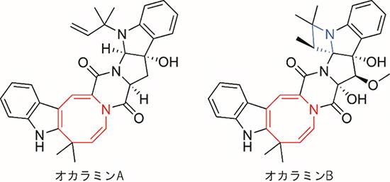 オカラミンの化学構造の図