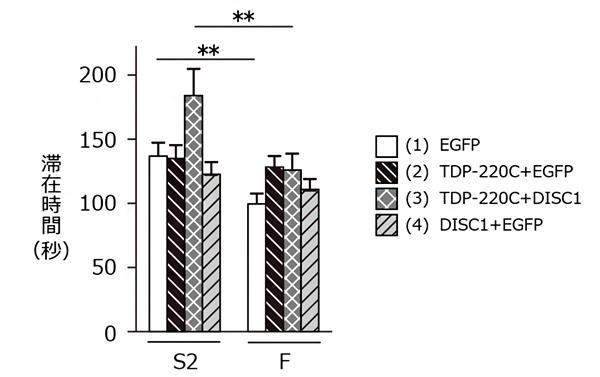 FTLDモデルマウス(TDP-220Cマウス)を用いた行動解析実験の図