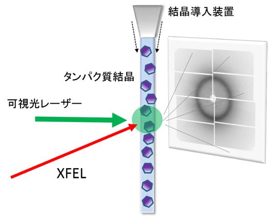 タンパク質の構造変化を捉える実験方法の概略図の画像