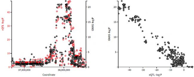 遺伝子バリアントが対象遺伝子の発現量を低下させることで発症に関わっている例の図