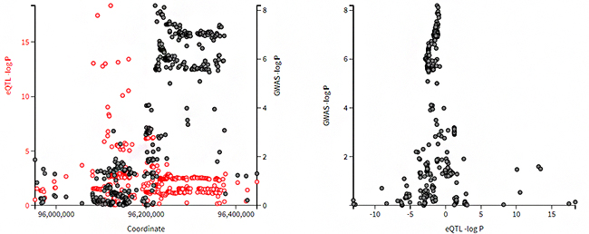 遺伝子バリアントが近傍遺伝子の発現量変化に関わっているが発症に関与しない場合の図