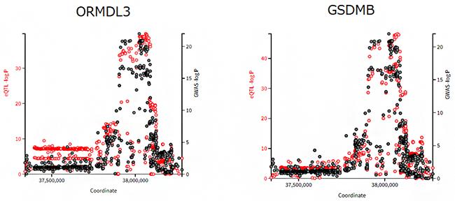 遺伝子バリアントが近傍の二つの遺伝子の発現量変化に関わって発症に関与する場合の図