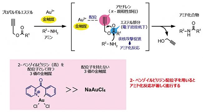 金触媒によるプロパルギルエステルのアミド化反応の画像