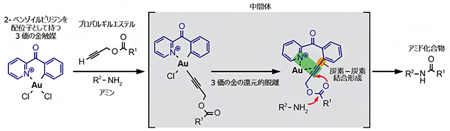 2-ベンゾイルピリジンを配位子として持つ金触媒によるプロパルギルエステルのアミド化の画像