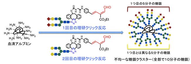 理研クリック反応による不均一糖鎖クラスターの効率的な合成の図