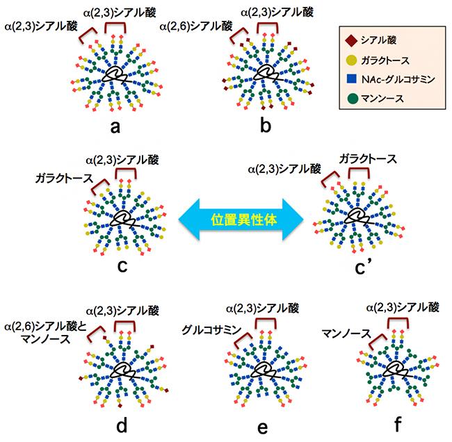 理研クリック反応で合成した7種類の不均一な糖鎖クラスターの図
