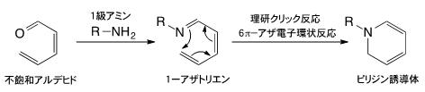 理研クリック反応(6π-アザ電子環状反応)の図
