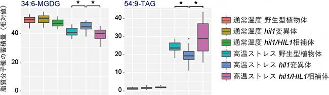 HIL1遺伝子変異体の脂質メタボローム解析の図