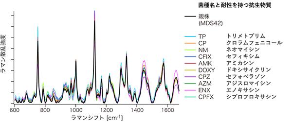 ハイスループットラマン散乱分光装置による薬剤耐性大腸菌のラマン散乱スペクトルの図