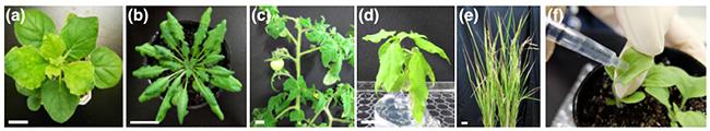 実験に用いた植物種と導入方法の図
