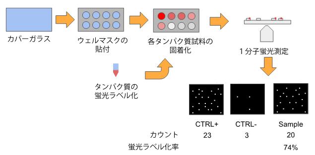 1分子蛍光ラベル化率の評価法の図