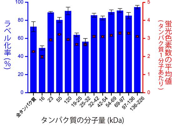 ヒト培養細胞の全タンパク質の蛍光ラベル化率の図