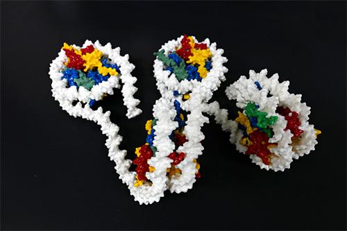 ヒストンとDNAの立体模型の図