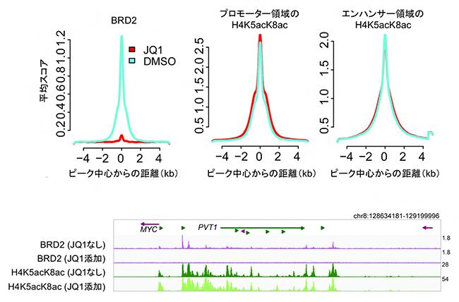 BET阻害剤によるヒストンH4の高アセチル化修飾(H4K5acK8ac)への影響の図