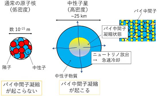 通常の原子核および中性子星とパイ中間子凝縮の有無の図