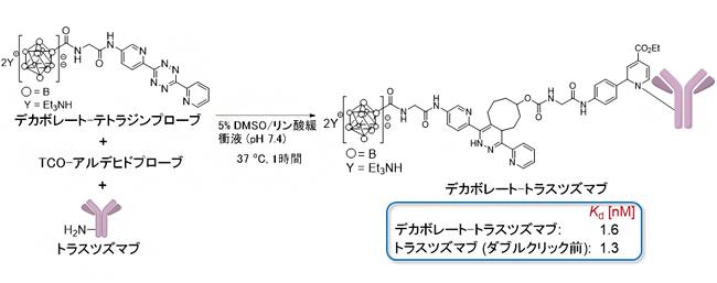 ダブルクリック標識法によるデカボレート-トラスツズマブの合成の図