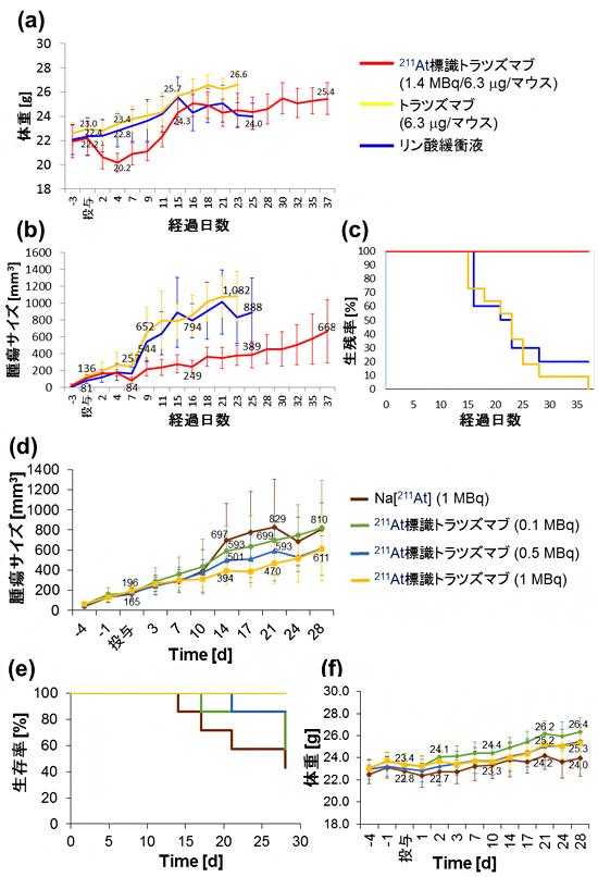 ダブルクリック標識法により合成した211At標識トラスツズマブのα線治療効果解析IIの図