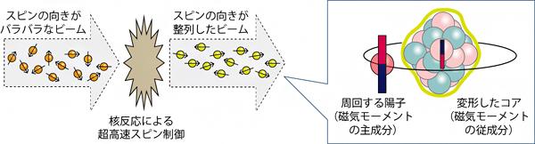 スピン整列した75Cuビームと、75Cuにおいて変形したコアを周回する陽子の図