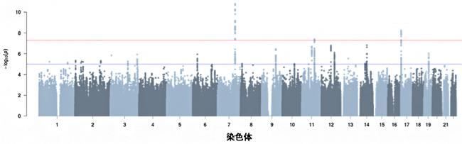 台湾人集団の踵骨の剛性指数(SI)のゲノムワイド関連解析(GWAS)の結果の図