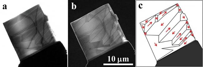 FeGa単結晶を観察したホロコーン・フーコー像の図
