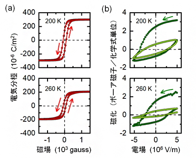 磁場印加による電気分極の変化(a)と電場印加による磁化の変化(b)の図